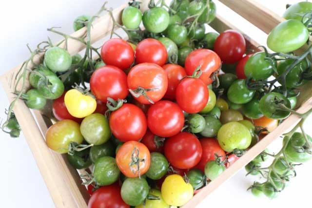 トマトの種類